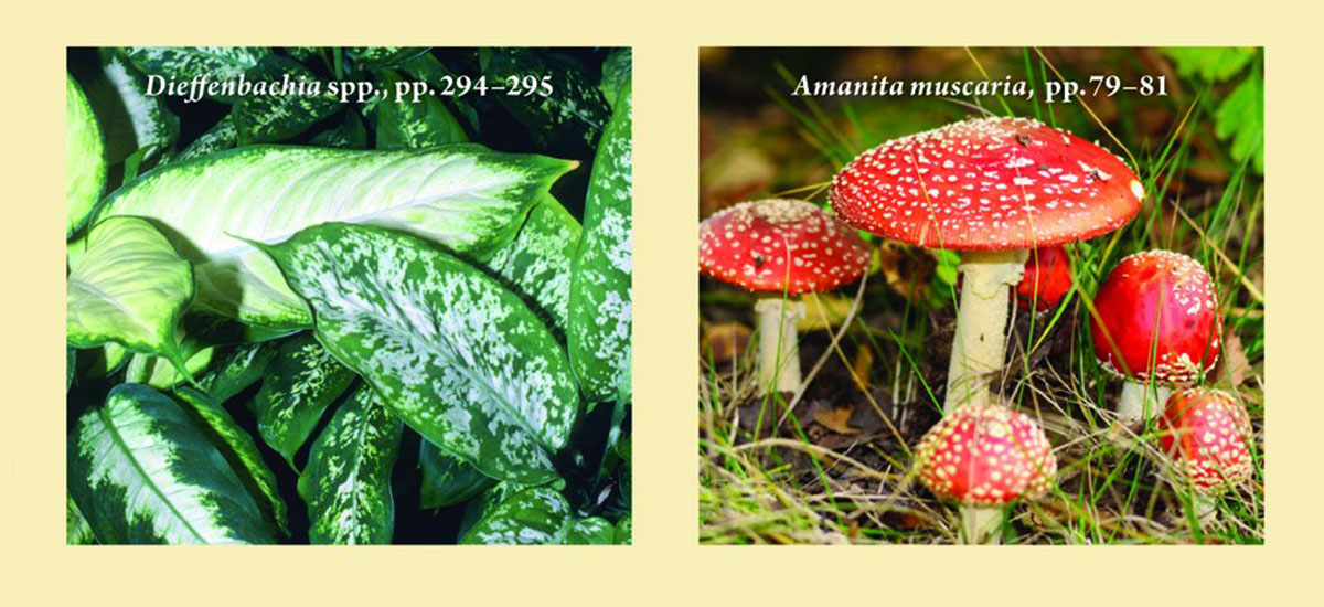 Common Poisonous Plants and Mushrooms of North America by Nancy Turner and Adam Szczawinski